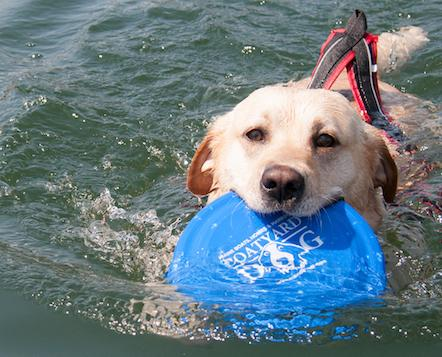 Paging all Pooches! Entries Sought for 15th Annual World Championship Boatyard Dog® Trials