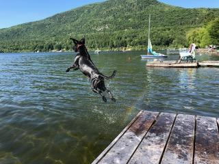 Meet the 2018 World Championship Boatyard Dog Competitors - HOBEY