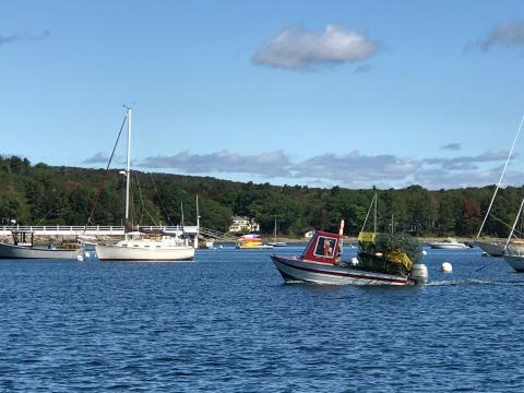 Maine's lobster landings inch back up