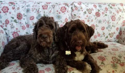Meet the 2018 World Championship Boatyard Dog Competitors - Truffle and Peppermint Patty