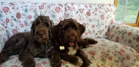 Meet the 2018 World Championship Boatyard Dog Competitors - TRUFFLE & PEPPERMINT PATTY