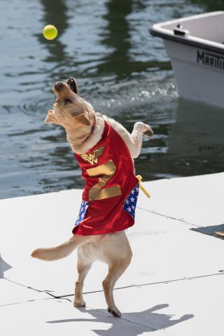 Meet the 2018 World Championship Boatyard Dog Competitors - 2017 World Champ Zola the Wonder Dog