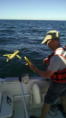 Study: the Gulf of Maine is changing color, becoming less productive
